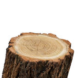 Top Of Stump Log Royalty Free Stock Photo