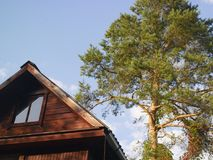 Old House And Tree. Top of old wooden house with a pine tree in the background royalty free stock photos