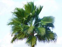 Top of a palm Royalty Free Stock Photos