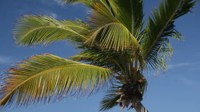 Top of palm on sky background. Top of palm on blue sky background stock video footage
