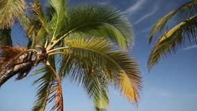 Top of palm on sky background stock video footage