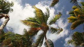 Top of palm on sky background stock footage