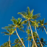 Top of palm tree on blue sky background Stock Photo