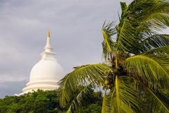 Top of Palm tree, Japanese peace pagoda on Royalty Free Stock Image