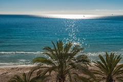 Top of palm tree at a tropical beach on a sunny day Stock Photography