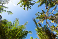 Top of palm trees Stock Photos