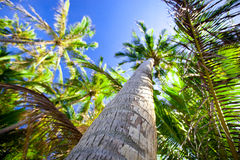 Top of palm trees Stock Photo