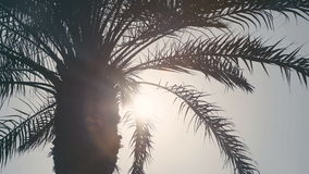 The top of the palm trees, the sun shines through the leaves. Palm. Close-up of Crohn`s palm. The desert heat. Exotic country. Resort. Palm Tree. CU of palm stock footage