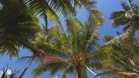 Top of palms. On blue sky background stock video footage