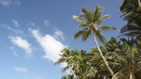 Top of palms on sky background stock footage