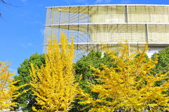 Top part of a modern laboratory in a university. The picture shows the top corner of advanced laboratory building of a university. Yellow autumn beech trees are Stock Photo