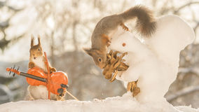 Top performence. Red squirrels in snow with ice squirrel flower and violin Stock Images