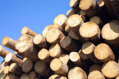 Top of pine logs stacked closeup  on blue Royalty Free Stock Photos