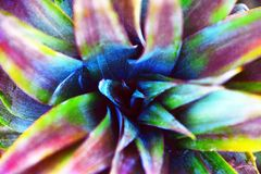 Abstract Rainbow Pineapple. The top of a pineapple in a rainbow colour scheme royalty free stock photography