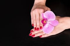 Top of pretty hands near iris flower over black Stock Images