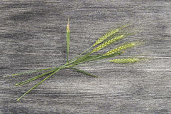 Top quality green wheat spike pictures for sample work and project designs.  royalty free stock image