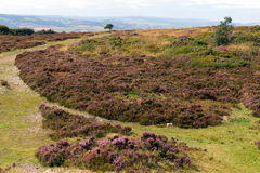 Top of Quantock Hills Somerset England Stock Photography