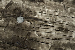 Top of railroad tie with spike Stock Photo