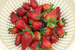 Top of Red Berries. Fresh organic strawberries drain in a colander after being washed Royalty Free Stock Photo