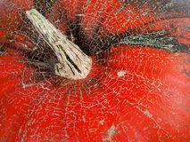 Top of red ripe pumpkin Royalty Free Stock Images