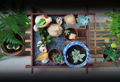 top roślinnych Zdjęcia Stock