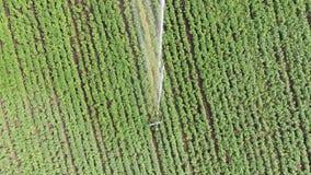 Top serial view: Irrigation Sprinklers in the field. Watering the field stock video