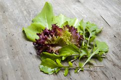 Top shot, close up of different types of green and red, purple freshly harvested lettuce, curly lettuce, rucola, arugula with stock image
