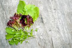 Top shot, close up of different types of green and red, purple freshly harvested lettuce, curly lettuce, rucola, arugula with. Water drops on rustic wooden stock images