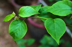 Multiple Green Leaves Loyalty Free Stock Photo royalty free stock images