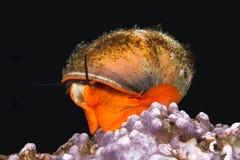 Top Snail Stock Image