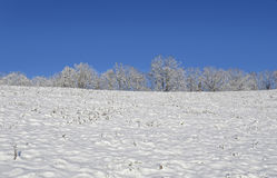 Top of a Snow Covered Hill. Trees in the distance on top of a mountain in the winter snow stock photos