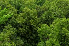 Top of summer green linden forest solid foliage pattern background. At daylight stock photography