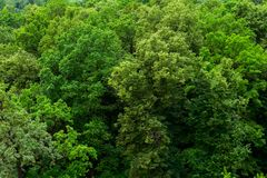 Top of summer green linden forest solid foliage pattern background. At daylight stock images