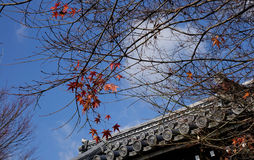The top of temple with autumn trees in Nikko, Japan Stock Image