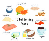 Top ten fat burning fat foods  illustration Royalty Free Stock Photos