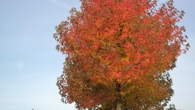 Top of a tree in autumn. Top of a colorful tree in autumn Royalty Free Stock Photo