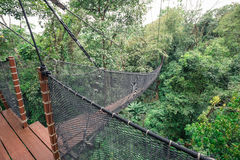 Top tree walking bridge Royalty Free Stock Image