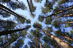 Top of the trees Royalty Free Stock Photo