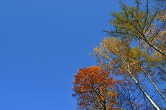 Top of the trees. Crown of the trees on the sky background Royalty Free Stock Photos