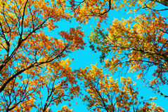 Top of trees and blue sky stock images