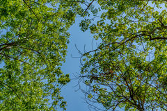 Top of the trees royalty free stock photos