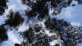 Top of the trees - 4K stock video footage