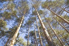 Top trees stock photography