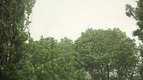 Top of a trees at storm. Very strong summer storm with close to hurricane force winds stock video