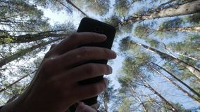 Top of the trees. View from the bottom. Top of the pine trees. Hand whit mobile phone stock video