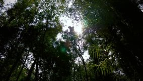 Walking through a tropical forest stock footage