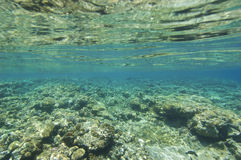 Top of a tropical coral reef under the surface Stock Images