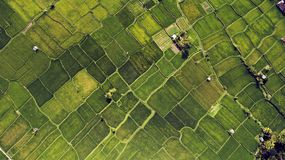 Wonderful paddy fields scenery with plants with healthy organic food in countryside. Top view aerial photo from drone of a green plantation of growing Stock Photography