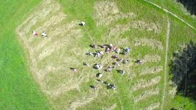 Top view aerial video of happy little childrens running on the meadow stock video footage
