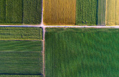 Top view of agricultural parcels. Abstract geometric shapes of agricultural parcels of different crops in yellow and green colors. Aerial view shoot from drone Royalty Free Stock Image